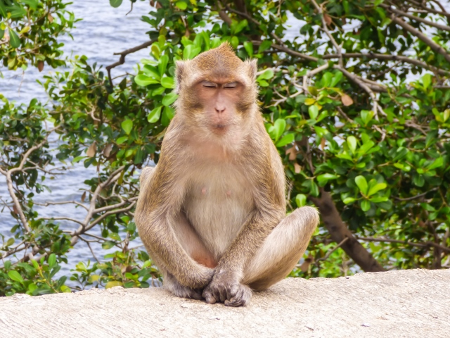 Our Monkey Mascot Image