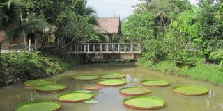 thai-farm-cooking-pond