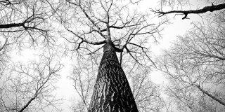branches-medicine