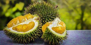 durian-fruit-800x400