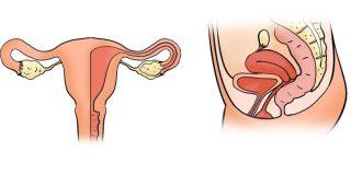womb-uterus-pelvic-bowl