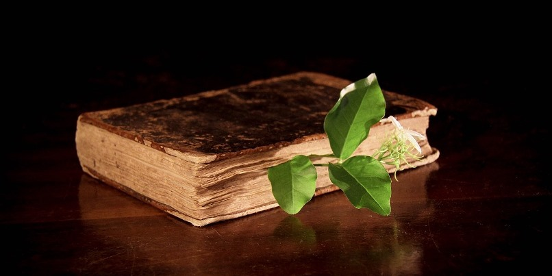 An Understanding of Herbal Medicine and Applications